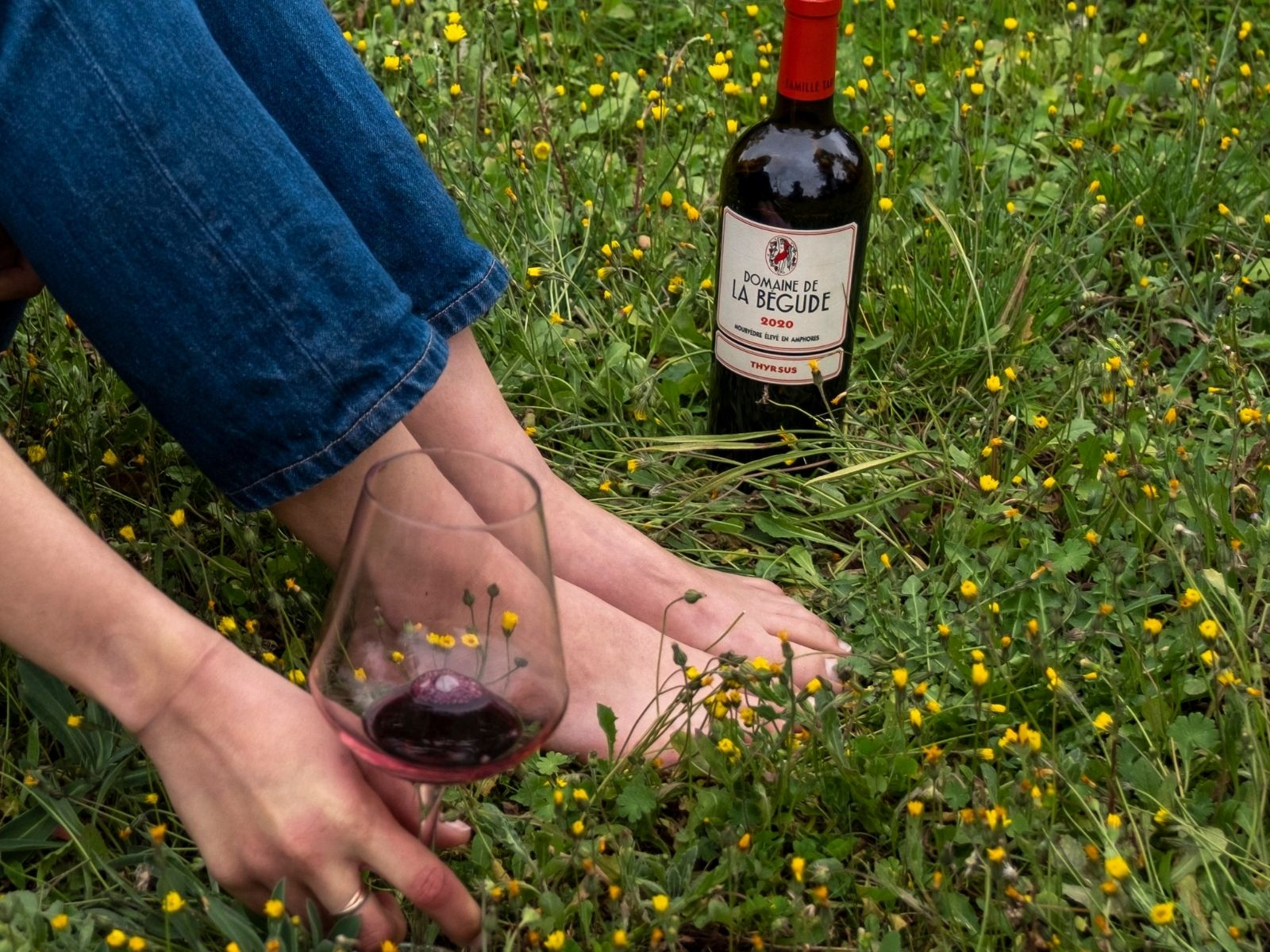 Vendange vin Bandol